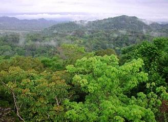 Անտառների վերականգնումն ուղի է հարթում դեպի ապաքինում և բարեկեցություն. Այսօր անտառների միջազգային օրն է