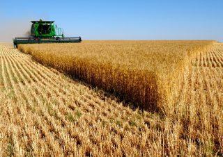 Ցորենի գինը՝ համաշխարհային խոշոր բորսաներում