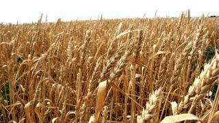 Փոթի նավահանգստից Հայաստան հացահատիկի երկաթուղային փոխադրումների սակագները նվազում են 52%-ով