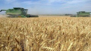 Գեղարքունիքում ըստ նախնական տվյալների՝  հավաքվել է մոտ 38 հազար 621 տոննա հացահատիկի համախառն բերք