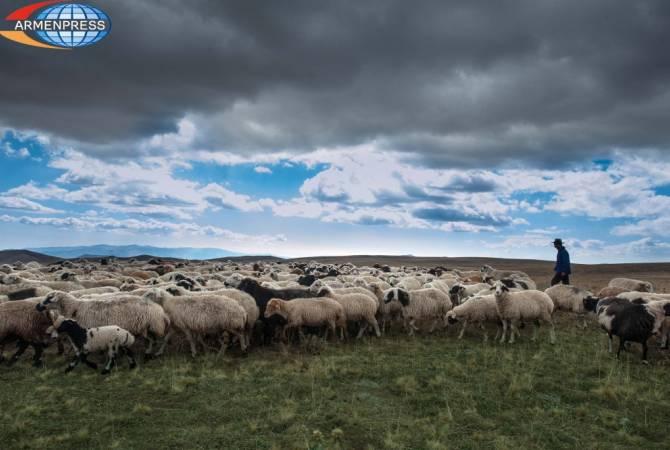 ՀՀ վարչապետի խոսքով՝ Հայաստանում արոտավայրերի 70 տոկոսի ներուժը օգտագործված չէ