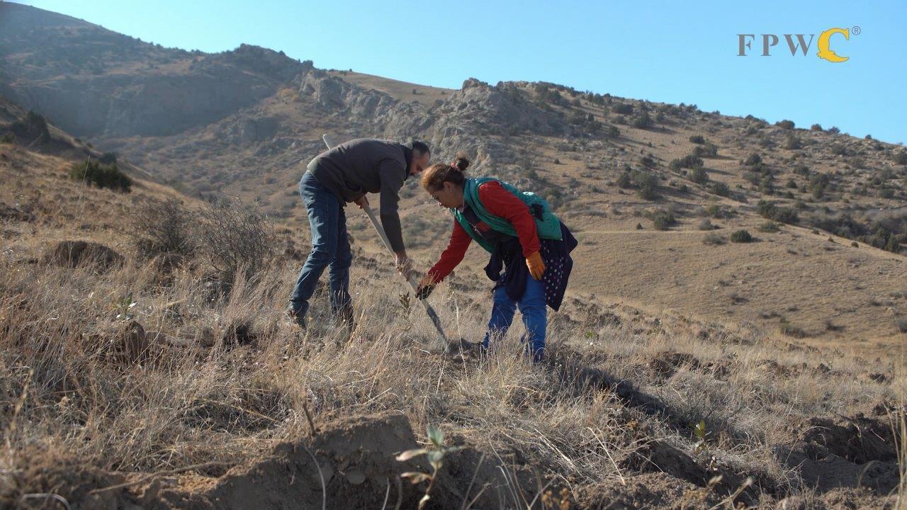 Վիվասել-ՄՏՍ. Արդարացված ջանքեր՝ անտառածածկ տարածքների վերականգնման համար