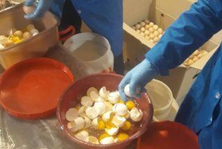 ՍԱՏՄ-ն ոչնչացրել է 54000 ժամկետանց ձու