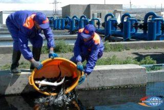 Հայկական ձկնամթերքի պահանջարկը Ռուսաստանում գնալով մեծանում է