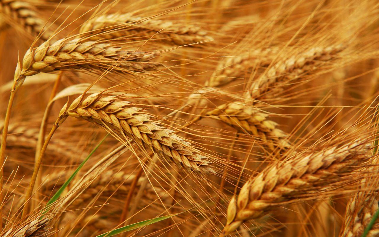 Նոր մեկնարկած ծրագրով երկրի գյուղատնտեսությունը կդառնա առավել դիմակայուն կլիմայական փոփոխությունների նկատմամբ