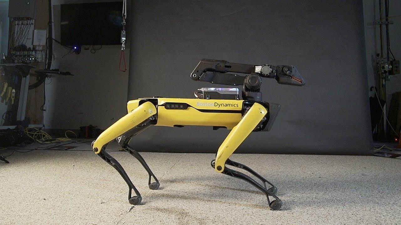 Ինչպես կարելի է օգտագործել ռոբոշանը կենցաղում. տեսանյութ