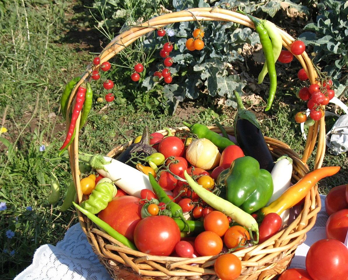 Սննդի անվտանգություն․ զարգացման հեռանկարները Հայաստանում Եվրոպական միության «EU4Business» ծրագրի հետ