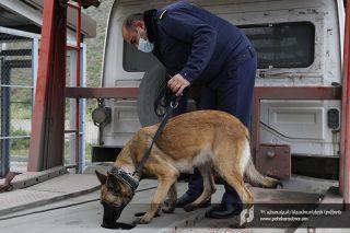 ՊԵԿ. Ծառայողական շները սեպտեմբերից հսկում են Բագրատաշենի անցակետով բեռնատարների հոսքը