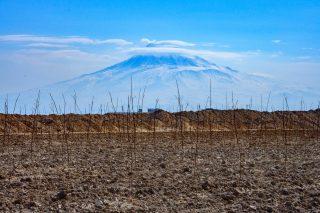 Հայկական ծիրանե երազանքը