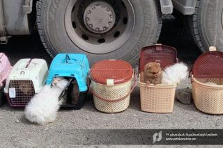 ՊԵԿ-ը կանխել է տարբեր ցեղատեսակի շան ձագերի անօրինական ճանապարհով տեղափոխման փորձը
