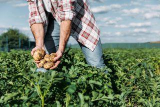 Ժողովուրդ օրաթերթ․ Մարդիկ հրաժարվում են գյուղատնտեսությամբ զբաղվելուց