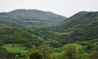 Հայաստանում ծառերի ավելացումը կօգնի դիմակայել կլիմայի փոփոխությանը