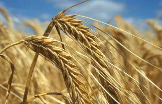 ՊԳԿ. Սննդամթերքի համաշխարհային գները հուլիսին նվազել են
