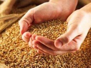В производстве зерновых культур лидирует Китай