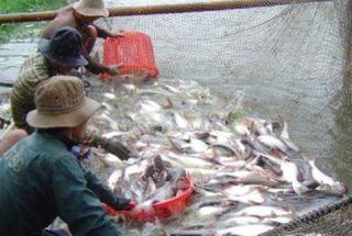 РФ ограничит ввоз рыбы с исландского и армянского предприятий