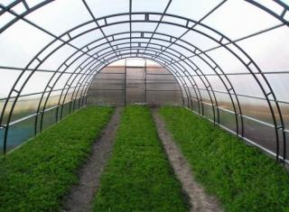 В Армении будут развиваться также малые теплицы