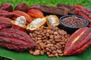 Цены на какао-бобы взлетели до максимума