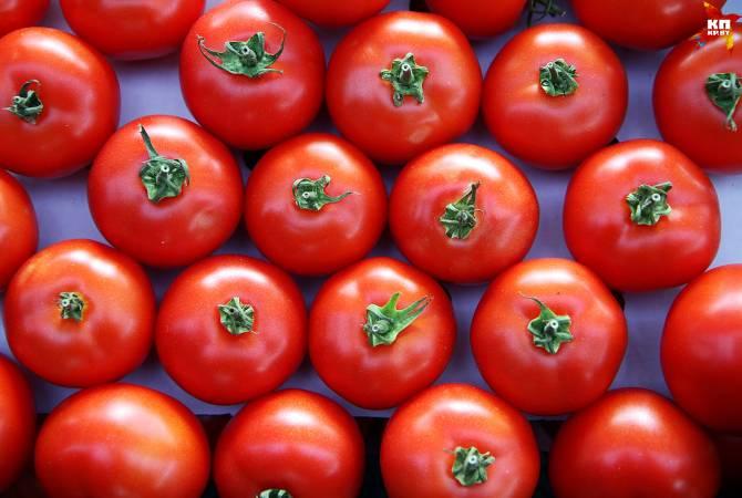 Турция поставит в РФ 50-60 тысяч тонн томатов в период межсезонья