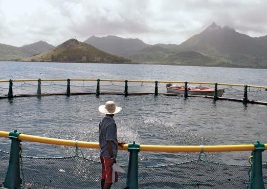 Ձկնորսության ոլորտում գրանցվել է 23% աճ