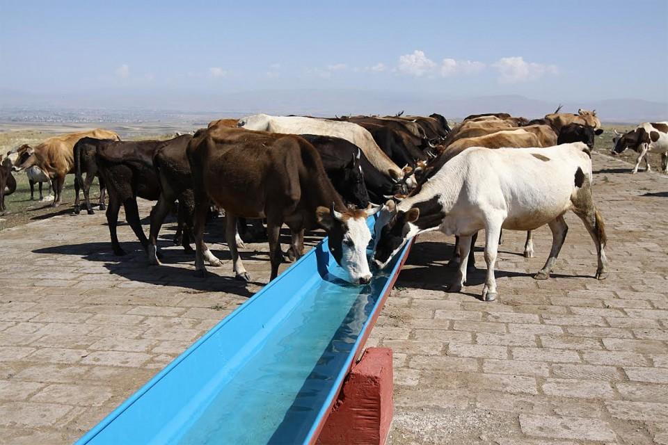 ԱԶԲ. գյուղատնտեսությունը ՀՀ տնտեսական աճի հիմնական շարժիչ ուժն է