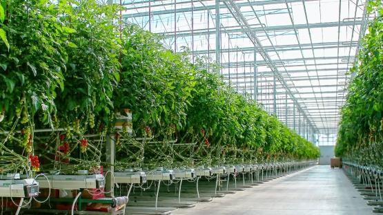 INVEST IN ARMENIA. Բանջարեղենային ջերմոցի ընդլայնման ներդրումային ծրագիր