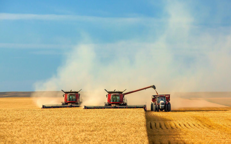 2016թ․-ին Ռուսաստանը կդառնա ցորենի արտահանման համաշխարհային առաջատար