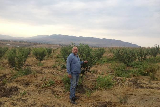 Սիրիահայ Ասմարյանները Արցախում էկզոտիկ ծառերով այգի են հիմնել