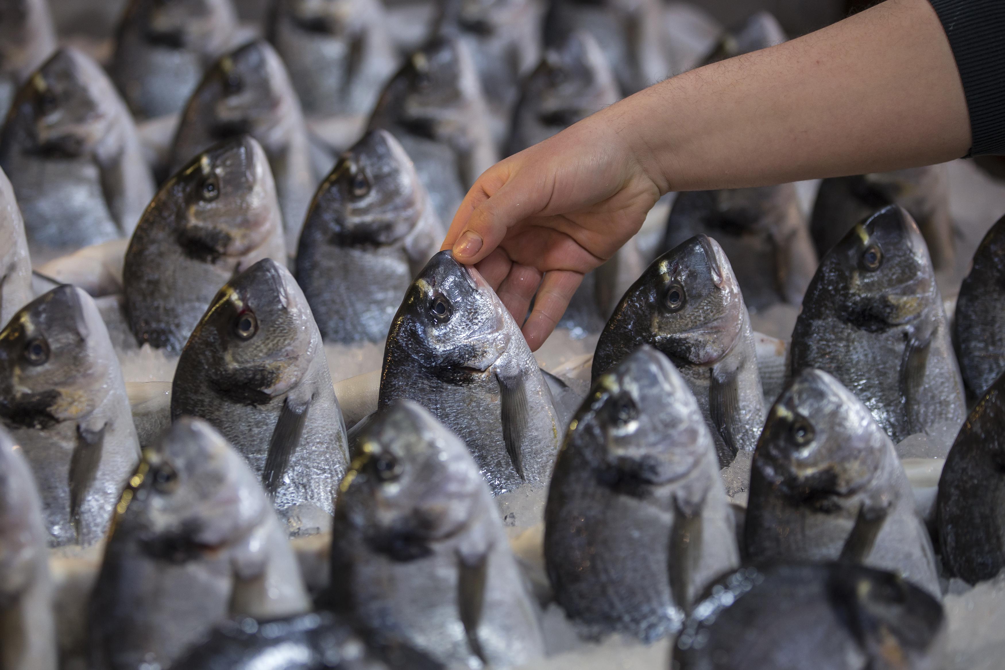 ՊԵԿ. 2016թ.-ին ձկան արտահանումը Հայաստանից աճել է 19.84%-ով