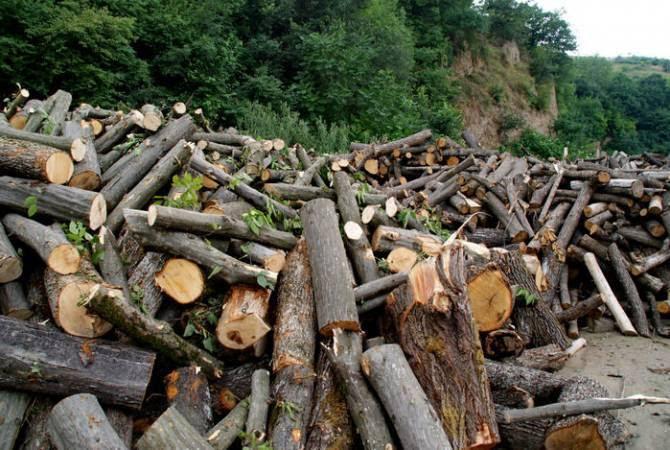 ԱԱԾ-ն բացահայտել է ծառերի մեծ ծավալների ապօրինի հատումների, պաշտոնատար անձանց կողմից թողտվության դեպքեր