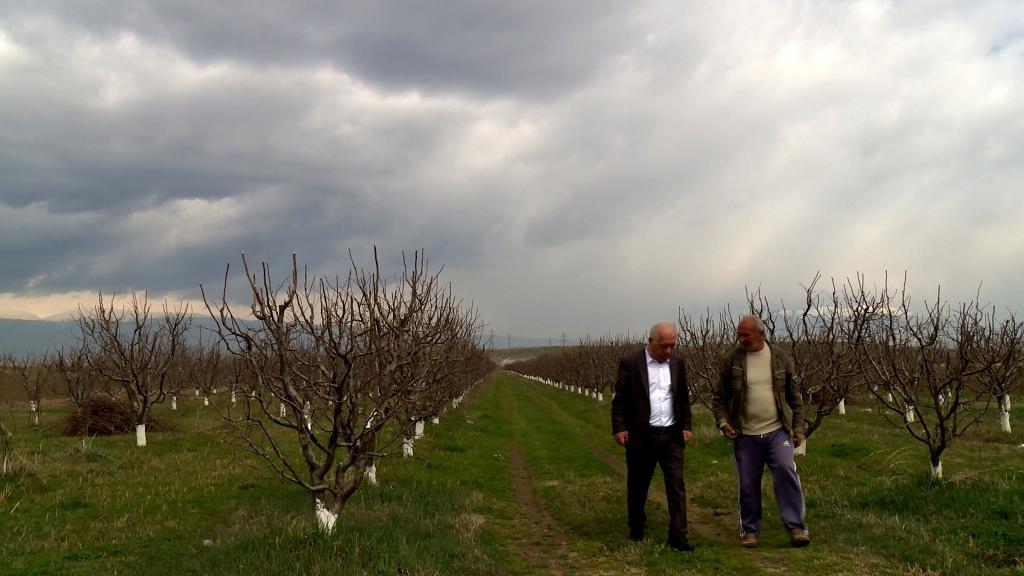 ՀՀ գյուղատնտեսության նախարարի տեղակալն Արմավիրի մարզում էր. հողօգտագործողներին հորդորել է ժամանակին ավարտել այգեգործական աշխատանքները