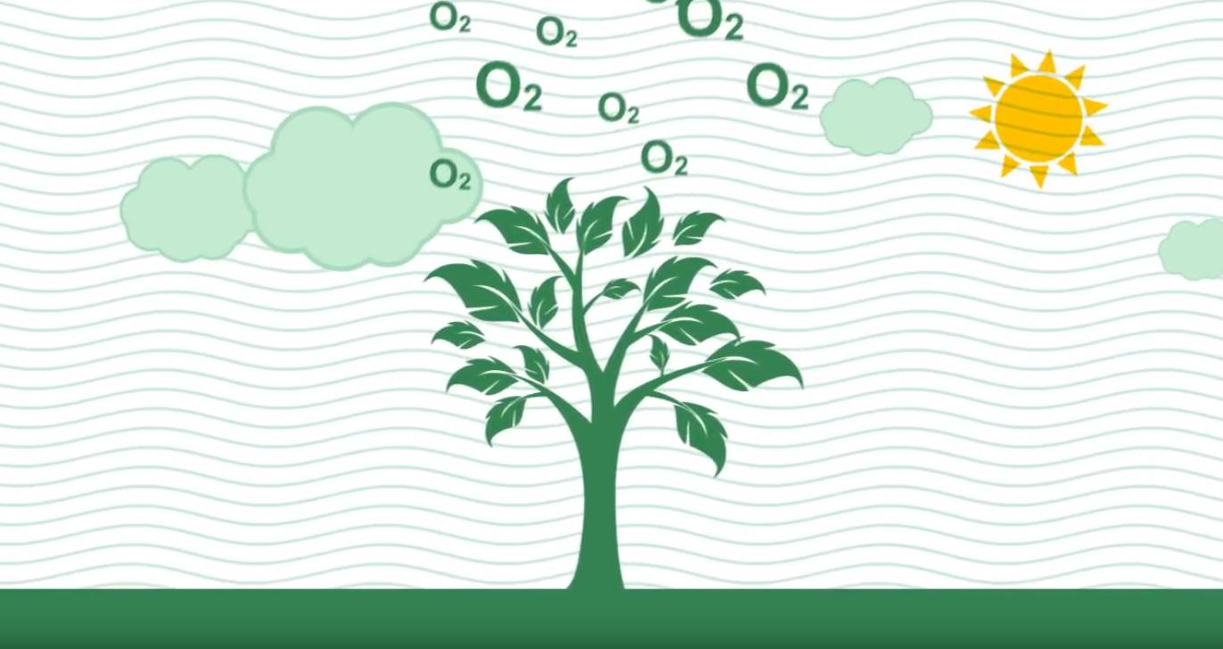 ԱԿԲԱ-ԿՐԵԴԻՏ ԱԳՐԻԿՈԼ ԲԱՆԿ. Համայնքներում շարունակվում է կանաչ ենթակառուցվածքների ստեղծման ծրագիրը