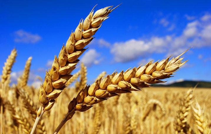 Կառավարությունը գյուղատնտեսական նշանակության հողամասերի արդյունավետ կառավարման օրինագիծ է ներկայացրել ԱԺ