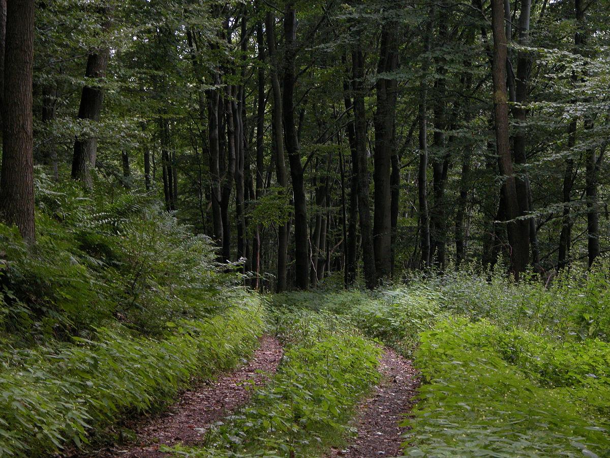Անտառապահների համար համապատասխան հագուստ ձեռք կբերվի