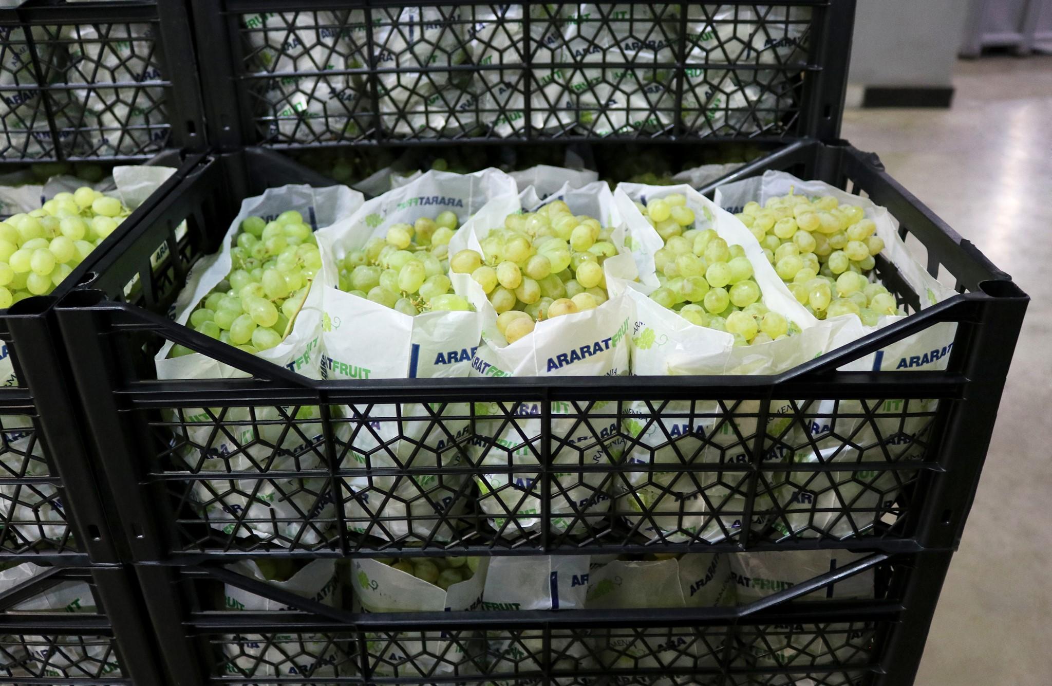Սպայկա. Հայկական խաղողը «Ararat Fruit» բրենդի ներքո առաջին անգամ կարտահանվի Եվրոպա և ԱՊՀ երկրներ