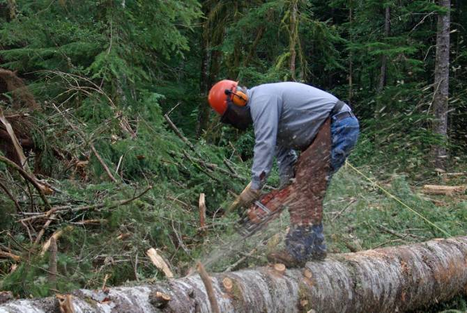 Հայաստանի Հանրապետություն. Թերթաքարային բրիկետներ անտառի հաշվին ապրող մարդուն