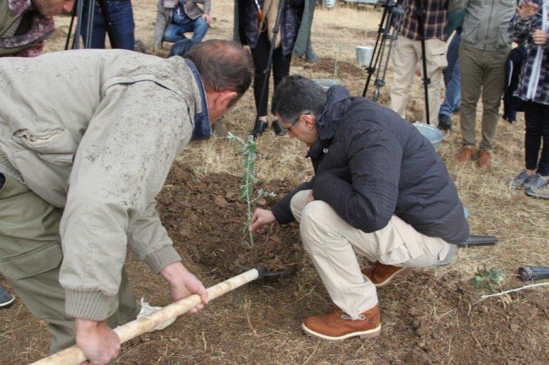 Վիվասել-ՄՏՍ. Վարդահովիտում վայրի ծառատեսակներ են տնկվել